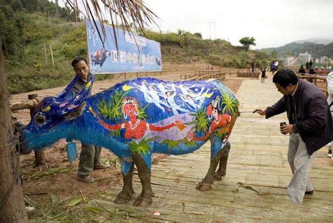 Innovative Art:Buffalo body painting contest held in China
